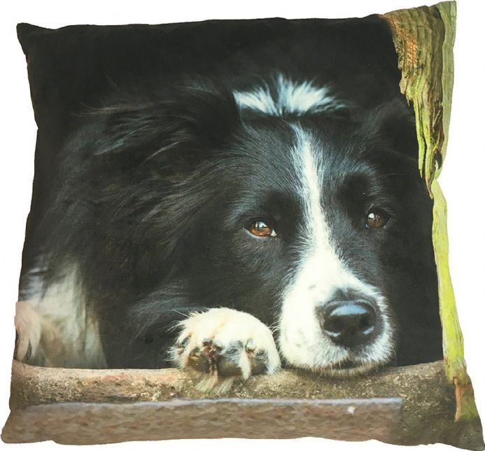 Collie Cushion